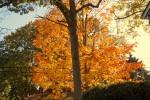 DSC_4828 Fathers house foliage