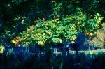 Home_DSC_5853 spotty color