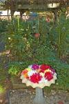Home_DSC_5874 Dahlias display