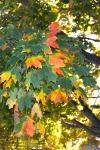 Home_DSC_5875 leaves
