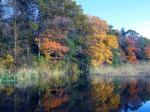 Home_IMG_0468 Short foliage season