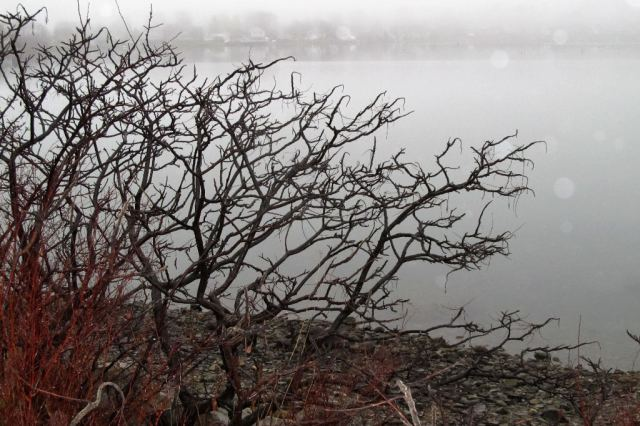 IMG_0689 Weymouth Back River Shore