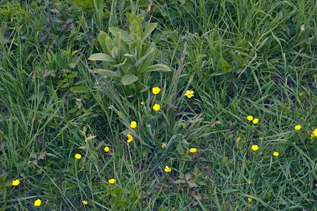 March StormDSC_5964 buttercups