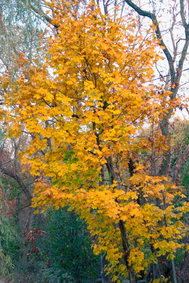 _DSC0053 Old Home Tree