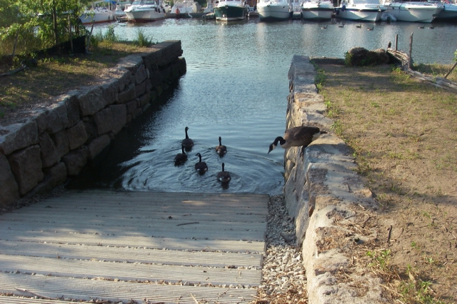 IMGP1073 Ramp at High Tide with ducks