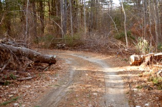 Logging Road