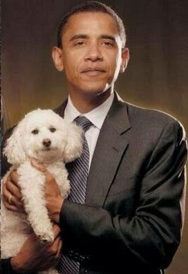 Poodle President