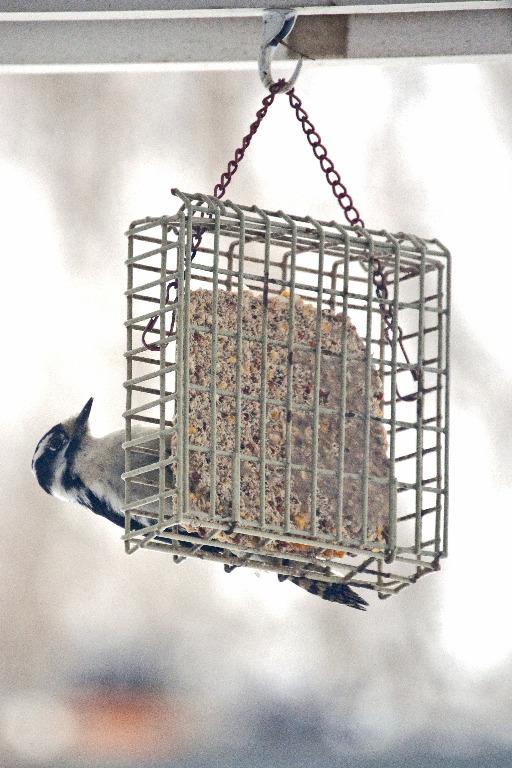 Bird FeederFeeder_DSC0537