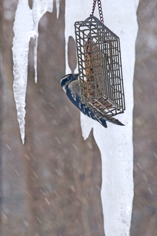 Bird Feederfinding food in a cold world_DSC0553