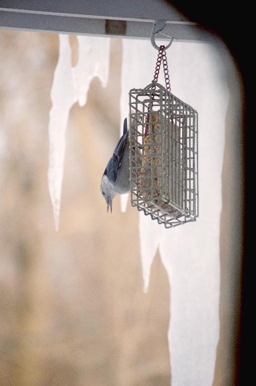 Bird FeederHis world is ice_DSC0535