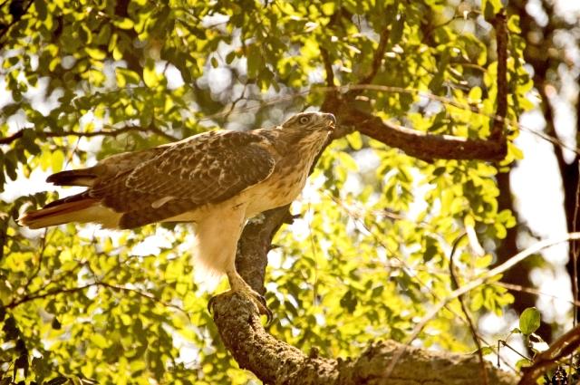 Hawk challege DSC_2788